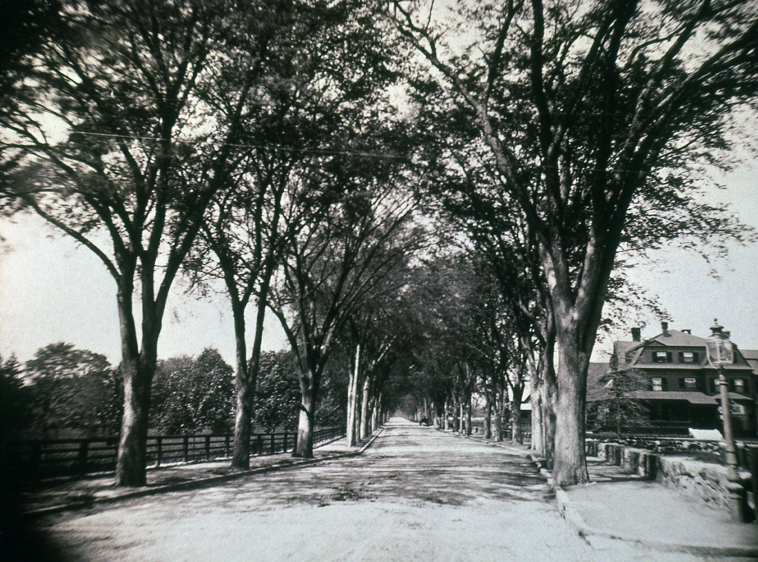 A view of tree lined Hawthorn Street